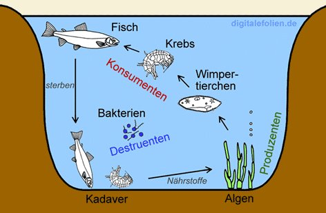 Kids science for Wassertiere im teich