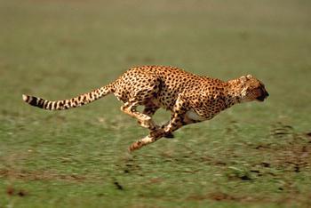 Tiere Geschwindigkeit